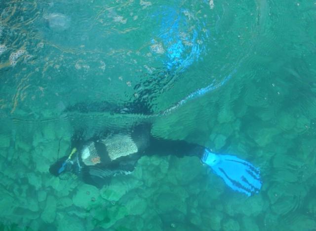 buzo en el agua_tremiti_vivo en italia