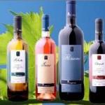 vinos-mognon