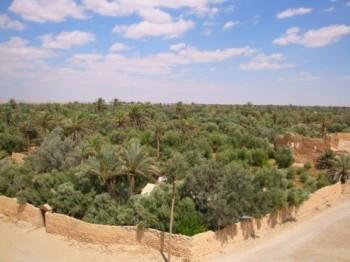 oasis en el desierto de siria - palmira